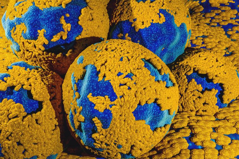 Szczepionka przeciwko HPV skutecznie zapobiega rozwoju nowotworów /123RF/PICSEL