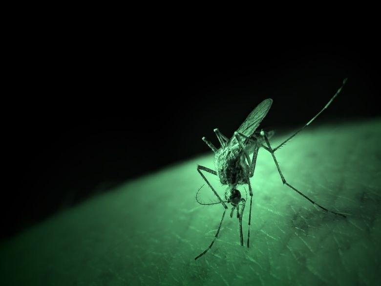 Szczepionka RTS,S ochroni nas przed malarią /123RF/PICSEL