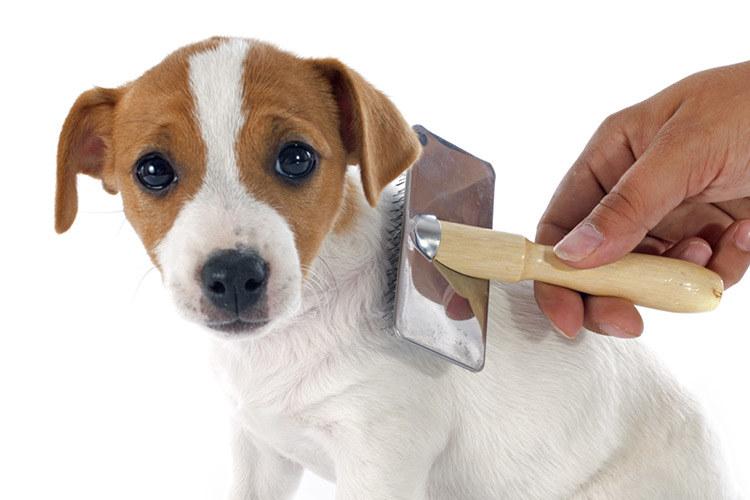 szczotkowanie psa /© Photogenica