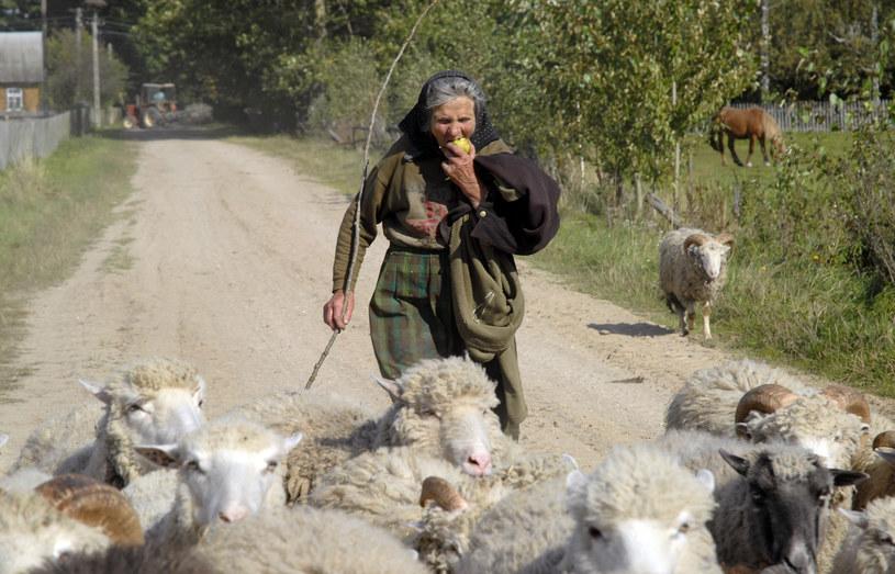 Szeptucha Anna na codzień zajmuje się gospodarstwem. /Andrzej Sidor /Agencja FORUM
