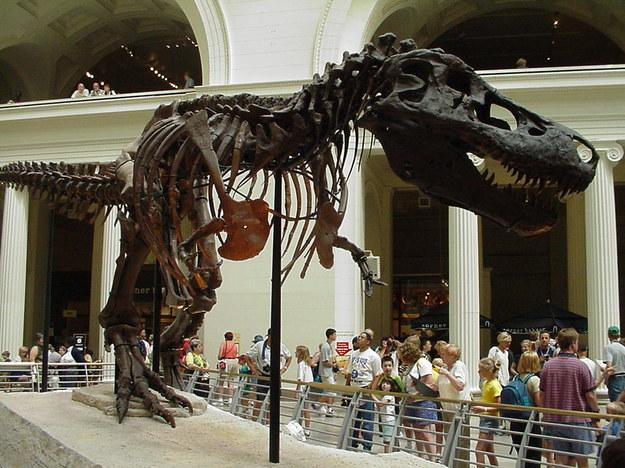 Szkielet Sue w Field Museum w Chicago /Grzegorz Jasiński /RMF FM