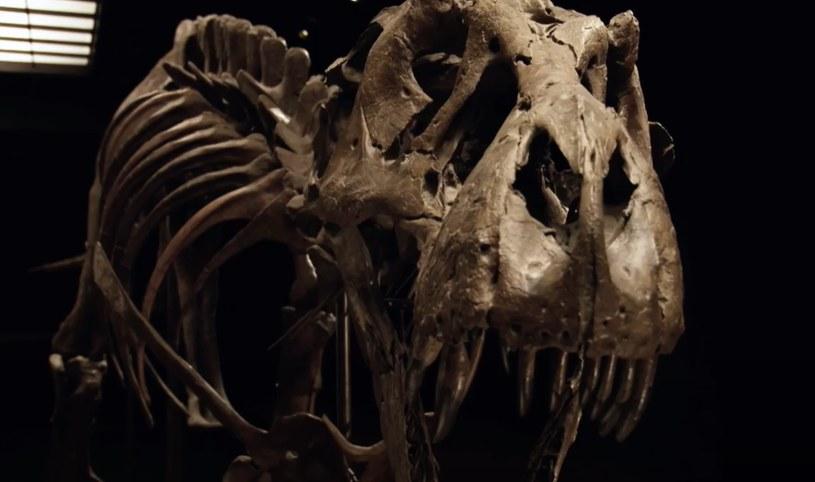 Szkielet tyranozaura został sprzedany za rekordowe 31,8 mln dolarów /Christie's /YouTube
