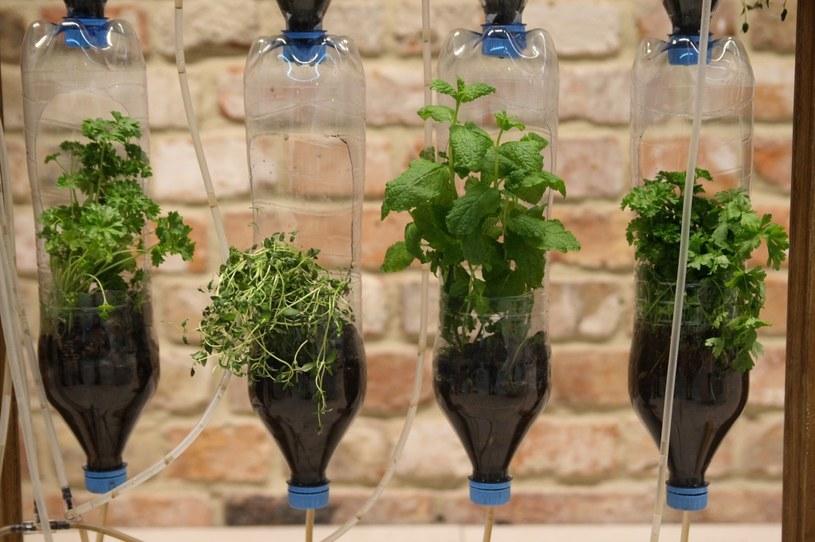 Szkieletem farmy są butelki, zestawione w pionowe kolumny /PAP life