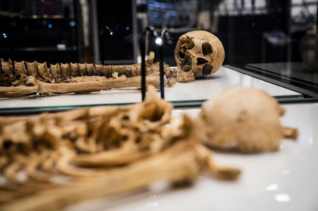 Szkielety dwóch wikińskich wojowników /Ida Marie Odgaard  /PAP/EPA
