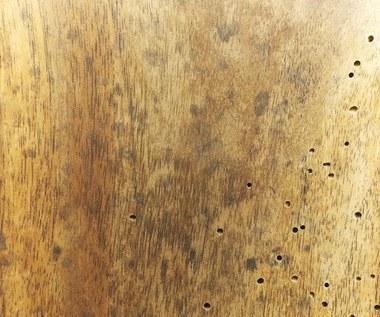 Szkodniki, które niszczą drewno w domu. Jak się ich szybko pozbyć?