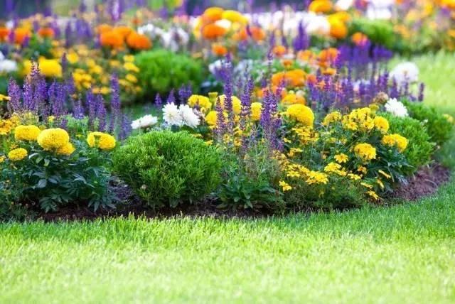 szkodniki ogród /© Photogenica
