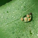 Szkodniki roślin doniczkowych: Jak się ich szybko pozbyć?