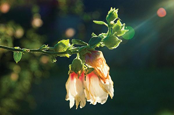 szkodniki w ogrodzie /© Photogenica
