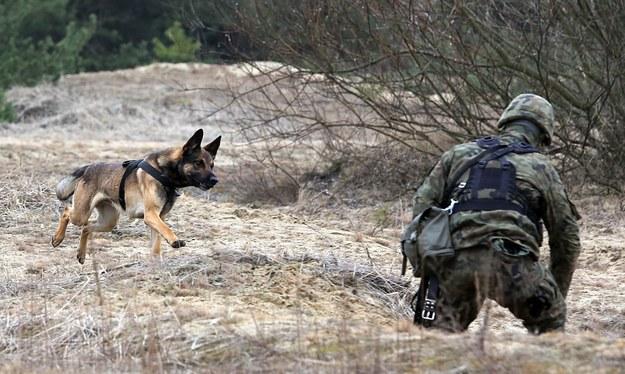 Szkolenie pirotechników... i ich psów na zdjęciu ilustracyjnym / Tomasz Gzell    /PAP