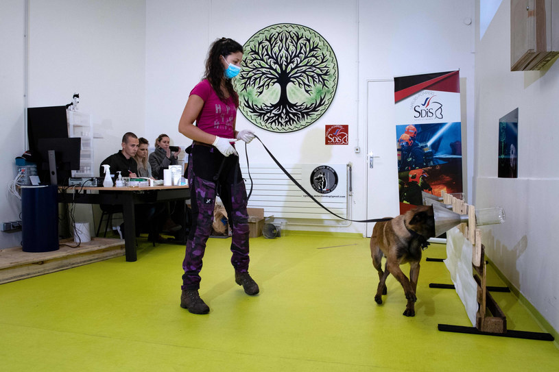 Szkolenie psa z wykrywania zapachów, zdjęcie ilustracyjne. /JOEL SAGET /East News
