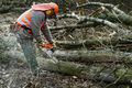 Szkółki poszukują pracowników leśnych