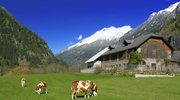 Szlak Sera w Lesie Bregenckim
