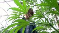 Szok! Leczą dzieci marihuaną