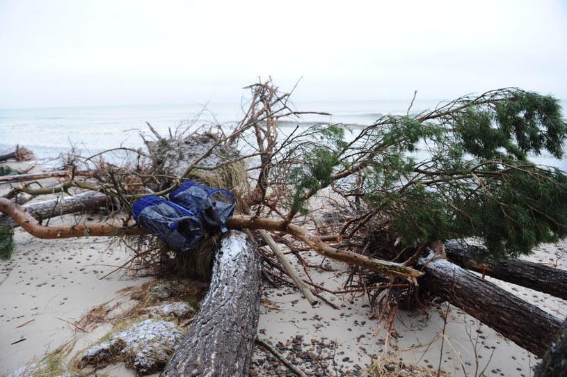 Sztorm spowodowany orkanem Ksawery powalił kilkaset drzew. /Marcin Bielecki /PAP