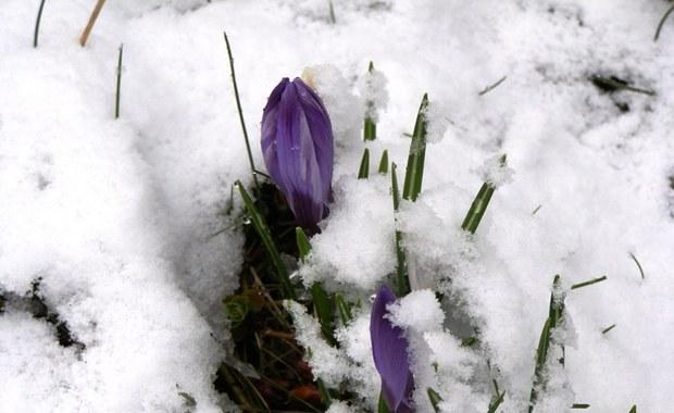 Szukamy pierwszych oznak zbliżającej się wiosny. Czekamy na zdjęcia od Was