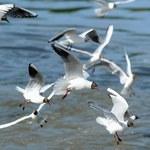 Szukasz inspiracji na Dzień Kobiet? Zajrzyj do świata ptaków