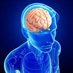 Szyszynka: Funkcje i choroby gruczołu