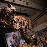 T. Rex mógł być... jeszcze potężniejszy