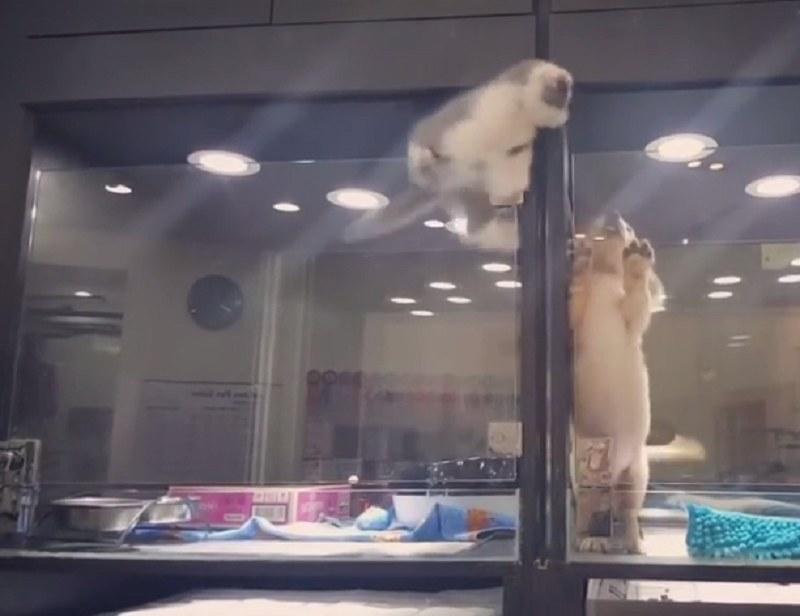 Ta dwójka nie żyje ze sobą jak pies z kotem! /WhatViraling01 /YouTube