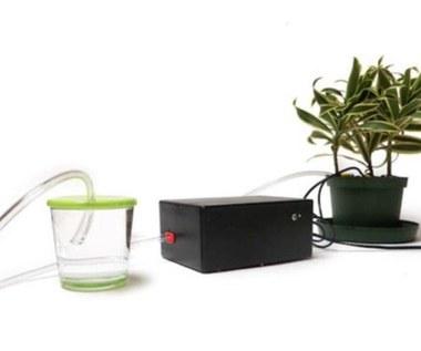 Ta roślina nie potrzebuje ludzi, podlewa się sama