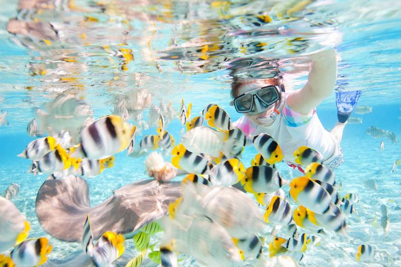 Tahiti to raj dla entuzjastów nurkowania, zarówno tych profesjonalnych, jak i amatorów /123RF/PICSEL