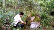Tajemnica borowego lasu