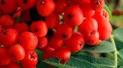 Tajemnice czerwonej kuleczki