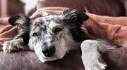 Tajemnicza choroba zabija psy w Norwegii