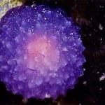 Tajemniczy organizm na dnie oceanu