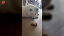 Tajemniczy przedmiot zaintrygował psa. Co to jest?