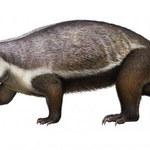Tajemniczy ssak, który żył wśród dinozaurów