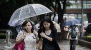 Tajfun Vicente: Wyrwane drzewa, ponad 100 rannych