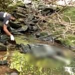 Tajlandia: Podejrzany o zabójstwo turystki ze Szwajcarii aresztowany