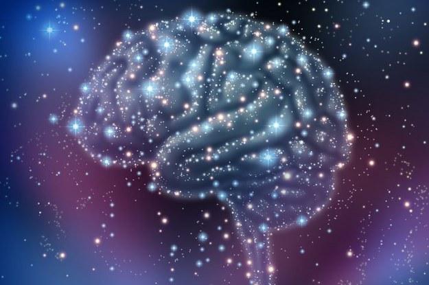 Tak dokładnego cyfrowego modelu mózgu jeszcze nie było /123RF/PICSEL