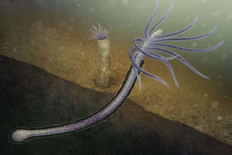 Tak mógł wyglądać Facivermis yunnanicus /materiały prasowe