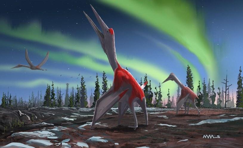 Tak mógł wyglądać nowo odkryty gatunek /David Maas / Queen Mary Universi /East News