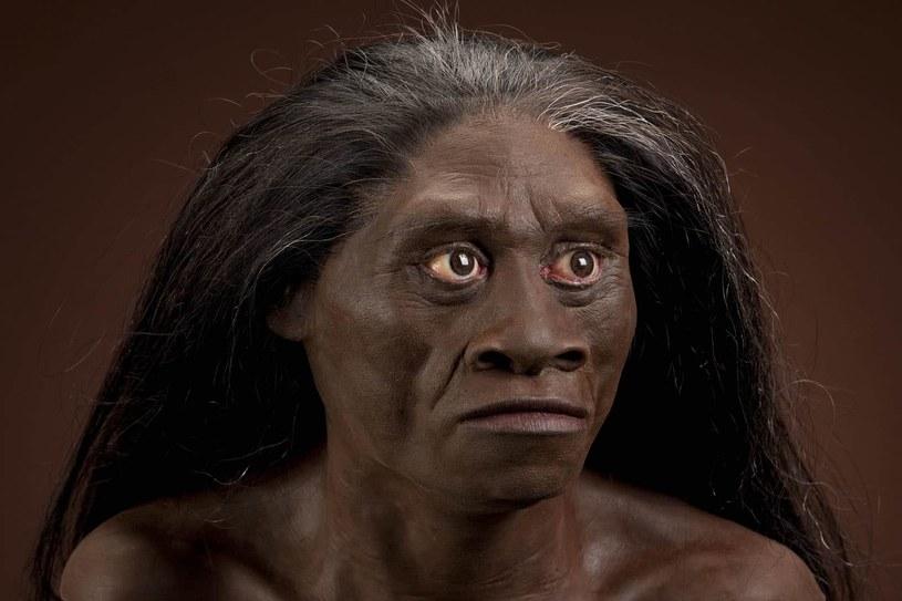 Tak mogli wyglądać przedstawiciele gatunku Homo floresiensis /materiały prasowe