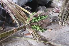Tak powstaje palma wielkanocna pana Zbigniewa z Lipnicy Murowanej