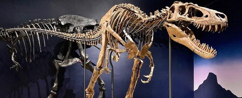 Tak prezentuje się szkielet Jane /materiały prasowe