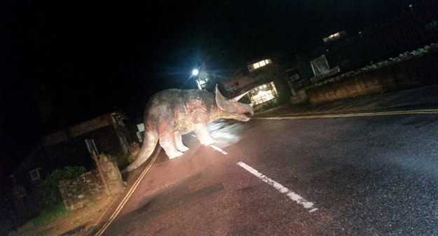 Tak, to jest triceratops. Pośrodku drogi /