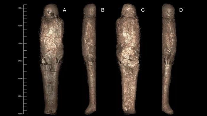 Tak wygląda niezwykła mumia błotna /materiały prasowe