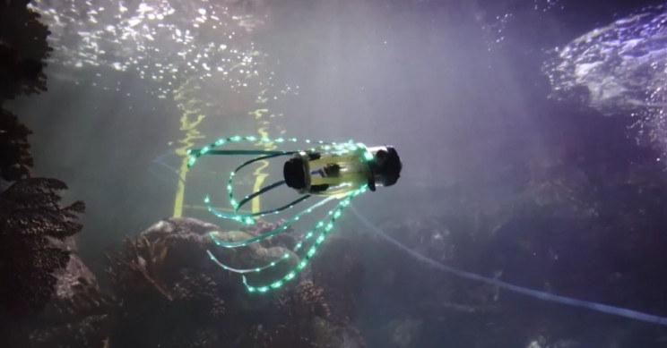 Tak wygląda squidbot /materiały prasowe