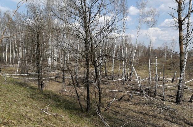 Tak wygląda teraz las w pobliżu elektrowni /SERGEY DOLZHENKO /PAP/EPA