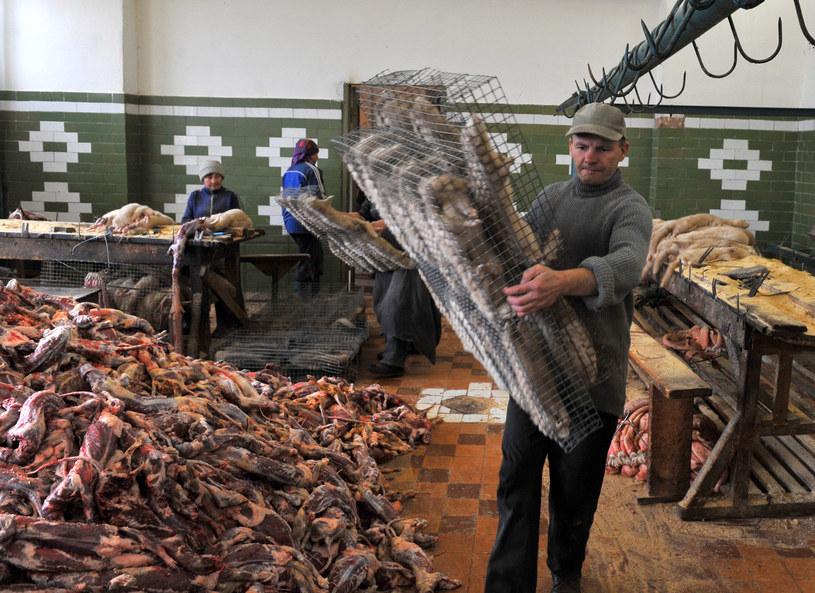 Tak wyglądają realia fermy futerkowej /AFP
