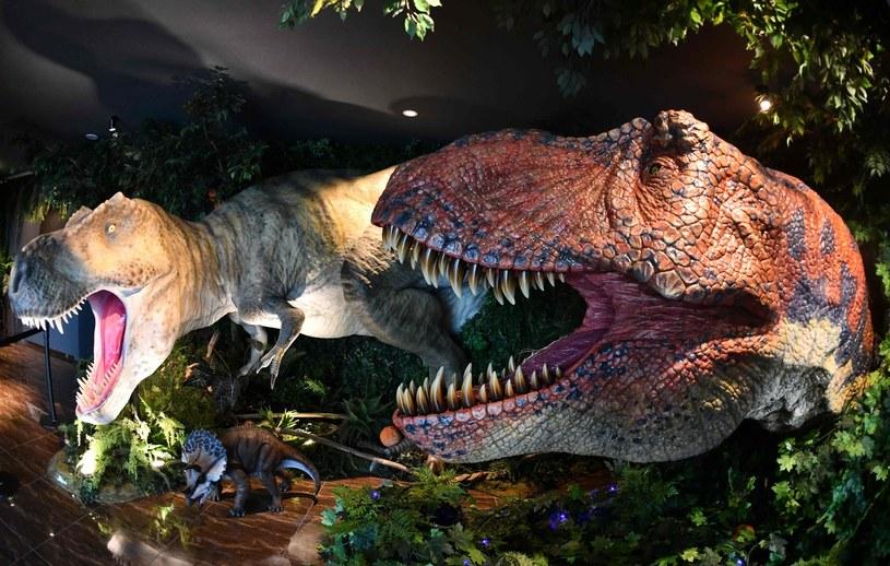 Tak wyglądały tyranozaury /AFP