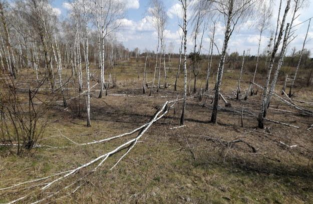 Takie widoki można zobaczyć w Czarnobylu /SERGEY DOLZHENKO /PAP/EPA
