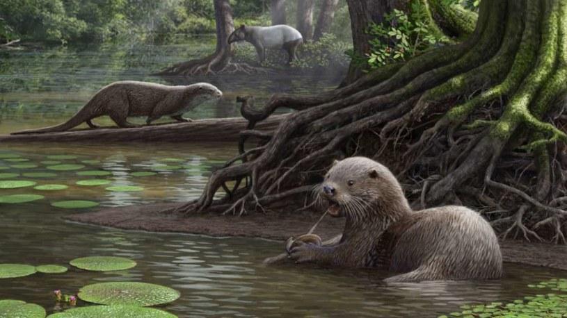 Takie zwierzęta kiedyś chodziły po świecie /materiały prasowe
