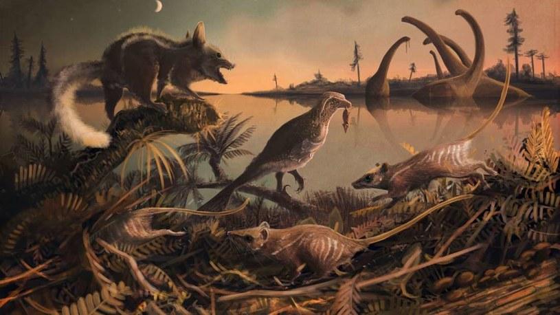 Takie zwierzęta przemierzały świat dinozaurów /materiały prasowe
