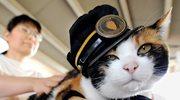 Tama - kotka zawiadowca