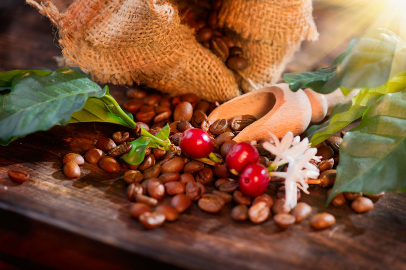 Tania robusta jest lepszym źródłem przeciwutleniaczy niż droższa arabika /123RF/PICSEL